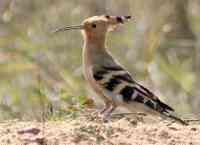 Птицы тамбовской области доклад 448